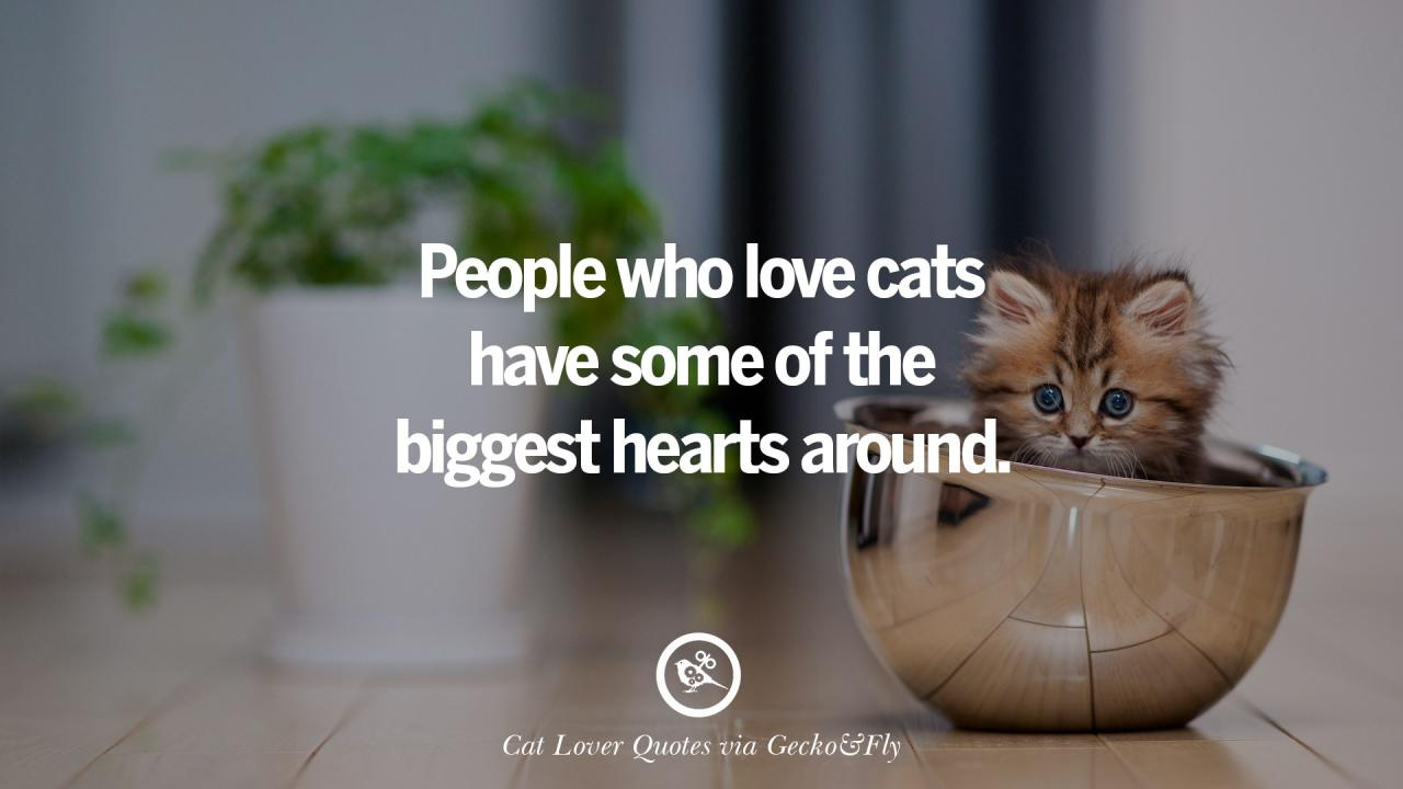 People Who Love Cats Have Some Of The Biggest Hearts Around