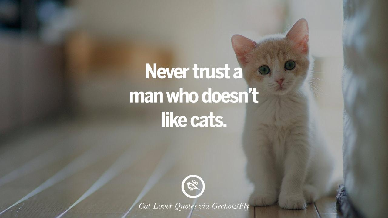 Never Trust A Man Who Doesnt Like Cats