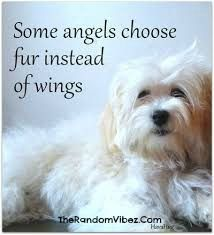 Best Quotes About Dogs Being Angels Images  C B Hundezitate