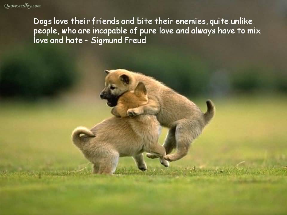 Dogs Love Their Friends And Bite Their Enemies