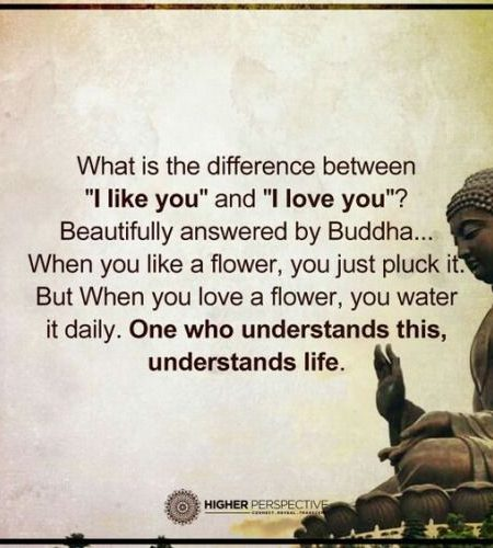 Buddhist Quotes On Love Unique Buddha Quotes About Life Death Peace And Love That Will Inspire
