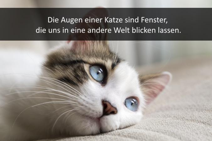 Image Result For Spruche Fur Whatsapp Kostenlos