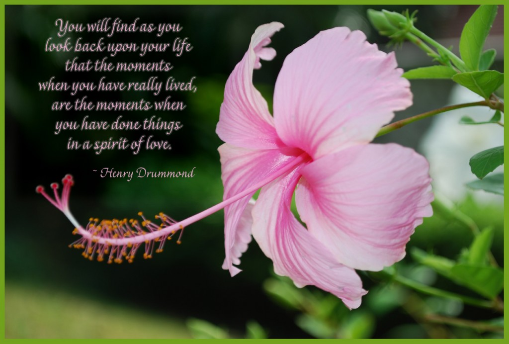 Pink Lily P O W_ Quote