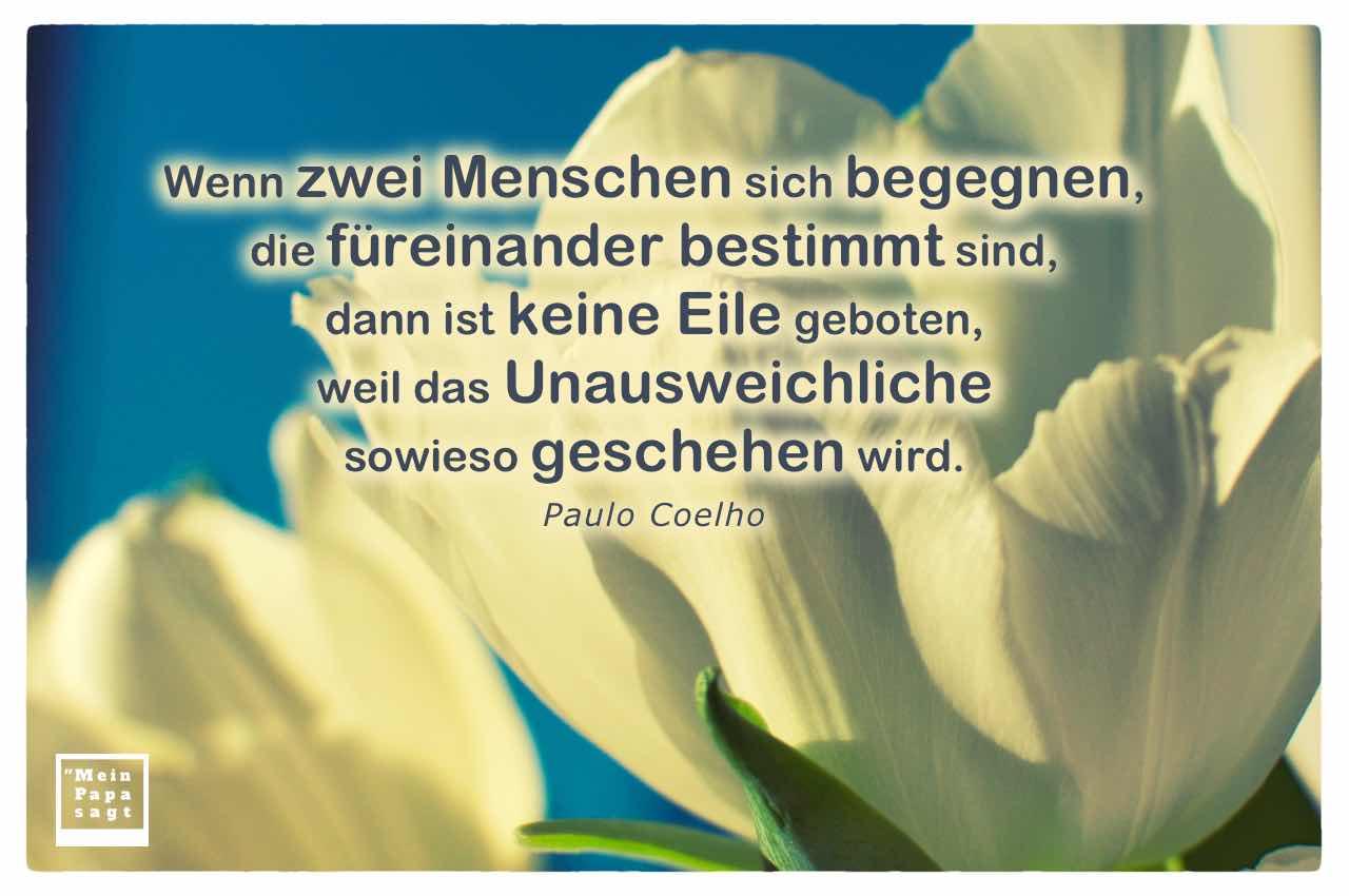 Weise Tulpen Mit Dem Coelho Zitat Wenn Zwei Menschen Sich Begegnen Fureinander Bestimmt