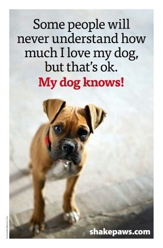 Some People Will Never Understand How Much I Love My Dog But Thats Boxer Quotesdog Quotes Funnydog