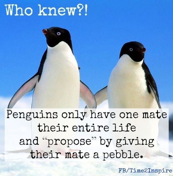Penguin Love Quote Via Time  Inspire