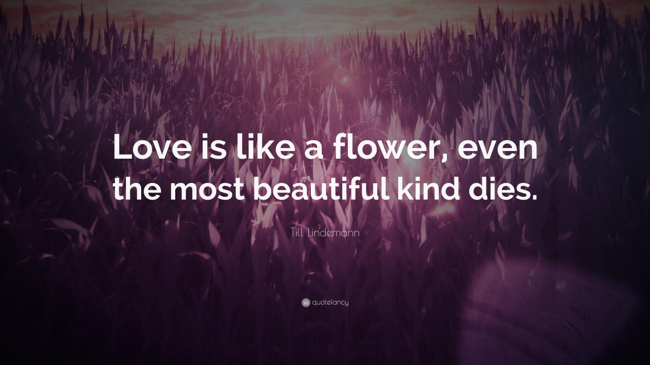 Till Lindemann Quote Love Is Like A Flower Even The Most Beautiful Kind
