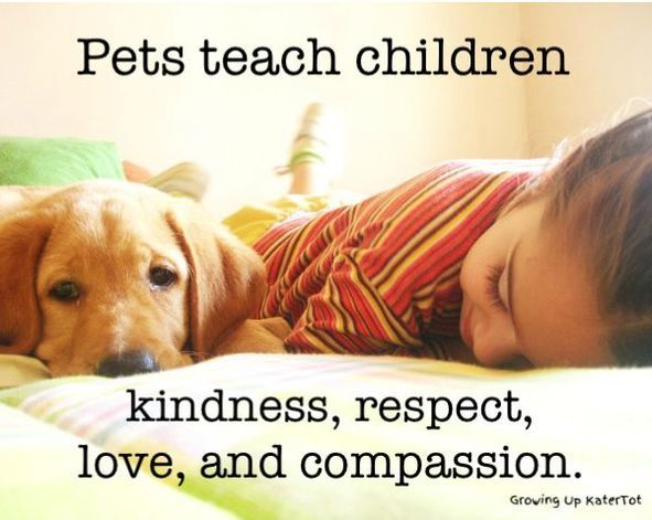 Pets Teach Children Kindness Respect Love And Comp Ion