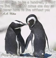 Penguin Quotes Quotes Pinterest Penguin Quotes Penguins And Animal