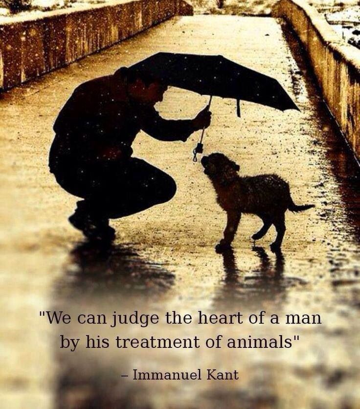 Respect Life Love Your Dogs Animals Dogsweetdog Quoteswisdom