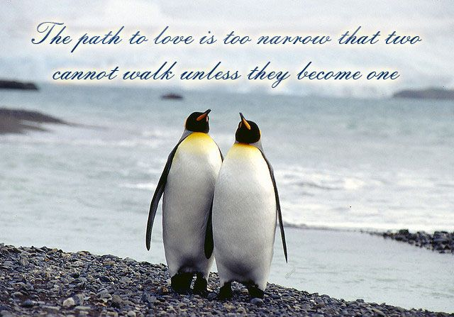 Penguin Love Quotes Quotesgram By Quotesgram