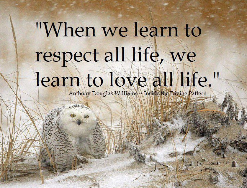 When We Learn To Respect All Life We Learn To Love All Life  C B Owlstruthsanimal Quotesrespect