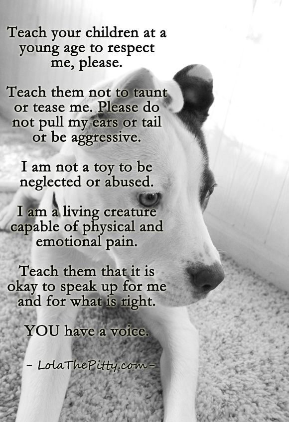 Very Important Teaching Children To Respect Animals At A Young Age Via Lolathepitty