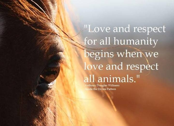 Love And Respect For All Humanity Begins When We Love And Respect All Animals Anthony