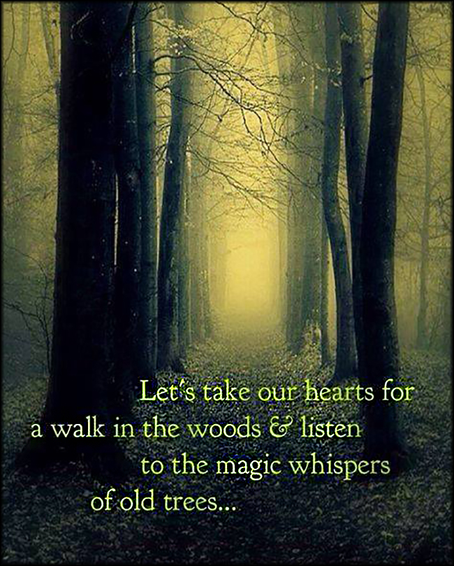 Lets Take Our Hearts For A Walk In The Woods And Listen To The Magic Whispers Of Old Trees Popular Inspirational Quotes At Emilysquotes