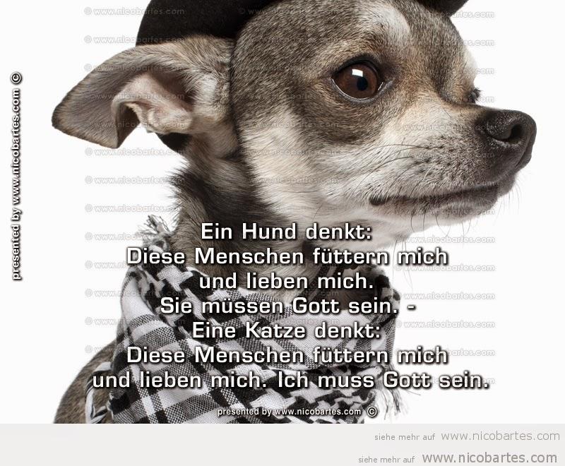 Sprüche Hund Mensch Beziehung Hundesprüche Thema Liebe