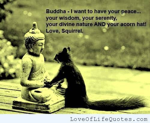 Squirrel Meets Buddha Love Of Life Quotes