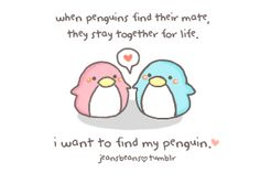 Cute Penguins Tumblr