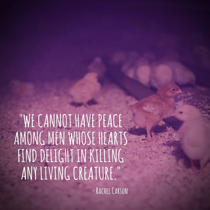 We Cannot Have Peace Among Men Whose Hearts Find Delight In Killing Any Living Creature