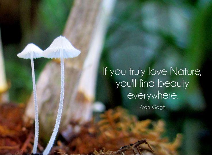 If You Truly Love Nature You Will Find Beauty Everywhere Picture Quote