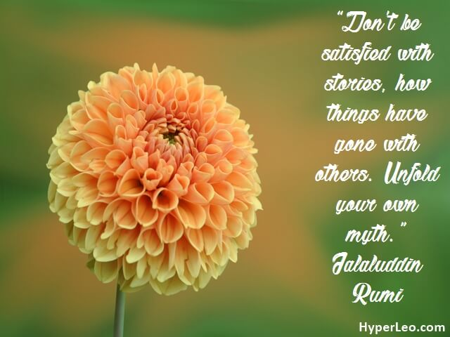 Rumi Quotes On Love On Flowers Wallpaper