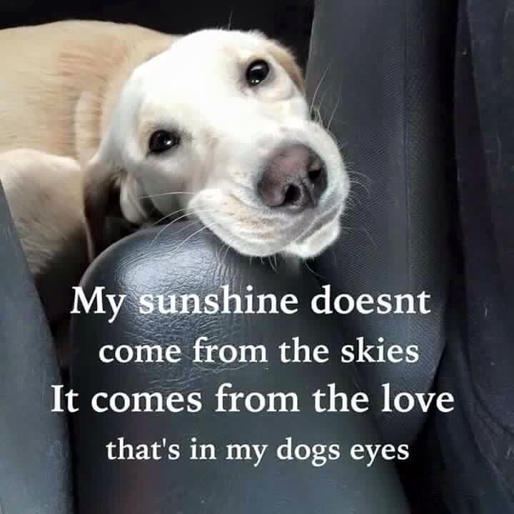 This Is So Cute And Heart Warming If Your A Dog Lover Save This I Love My Dog And I Never Wanna Lose Him Treat Ur Dogs Right Love Them And They