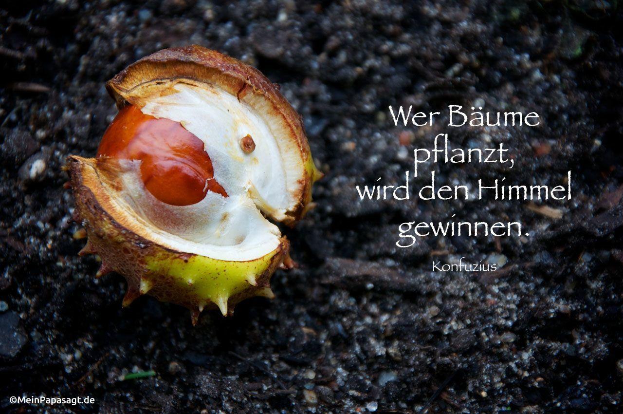 Mein Papa Sagt Wer Baume Pflanzt Wird Den Himmel Gewinnen Konfuzius Zitate Deutsch Quotes Weisheiten Zitate Taglich Neu Auf Www Meinpapasagt De