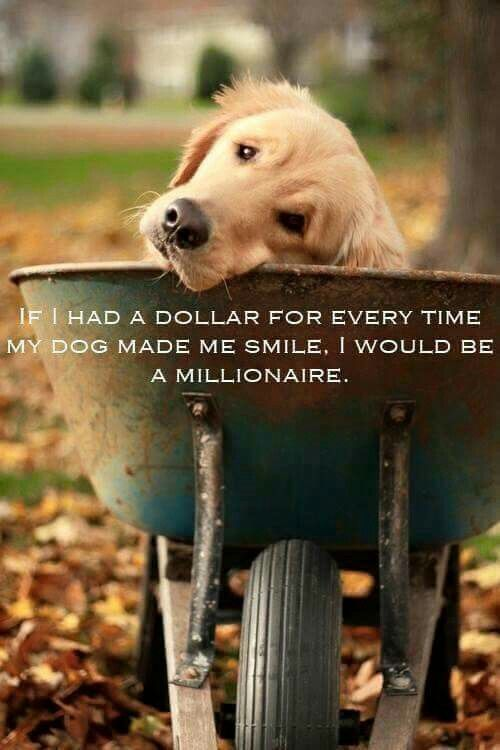 Blessed And Rich In Unconditional Love  Dog Quotes