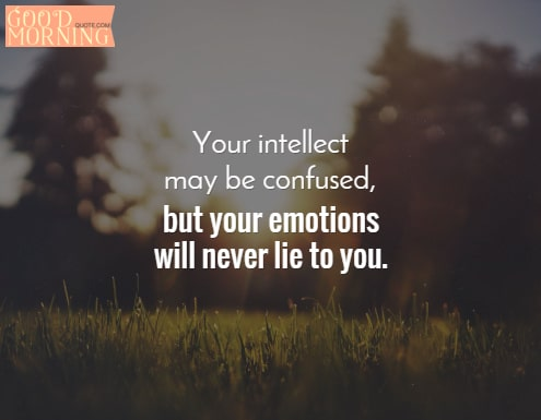 Confused Quotes About Love  Your Intellect May Be Confused But Your Emotions Will Never Lie To You