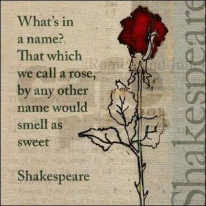 Shakespeare Rose Quote