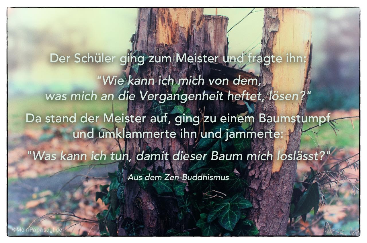 Baumstumpf Mit Dem Zen Buddhistischen Zitat Der Schuler Ging Zum Meister Und Fragte Ihn