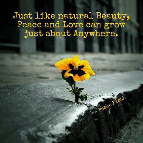 Natural Beauty Quotes Nice Love Quotes Images Morning Love Quotes Images