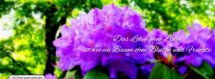 Zitat Blumen Titelbild