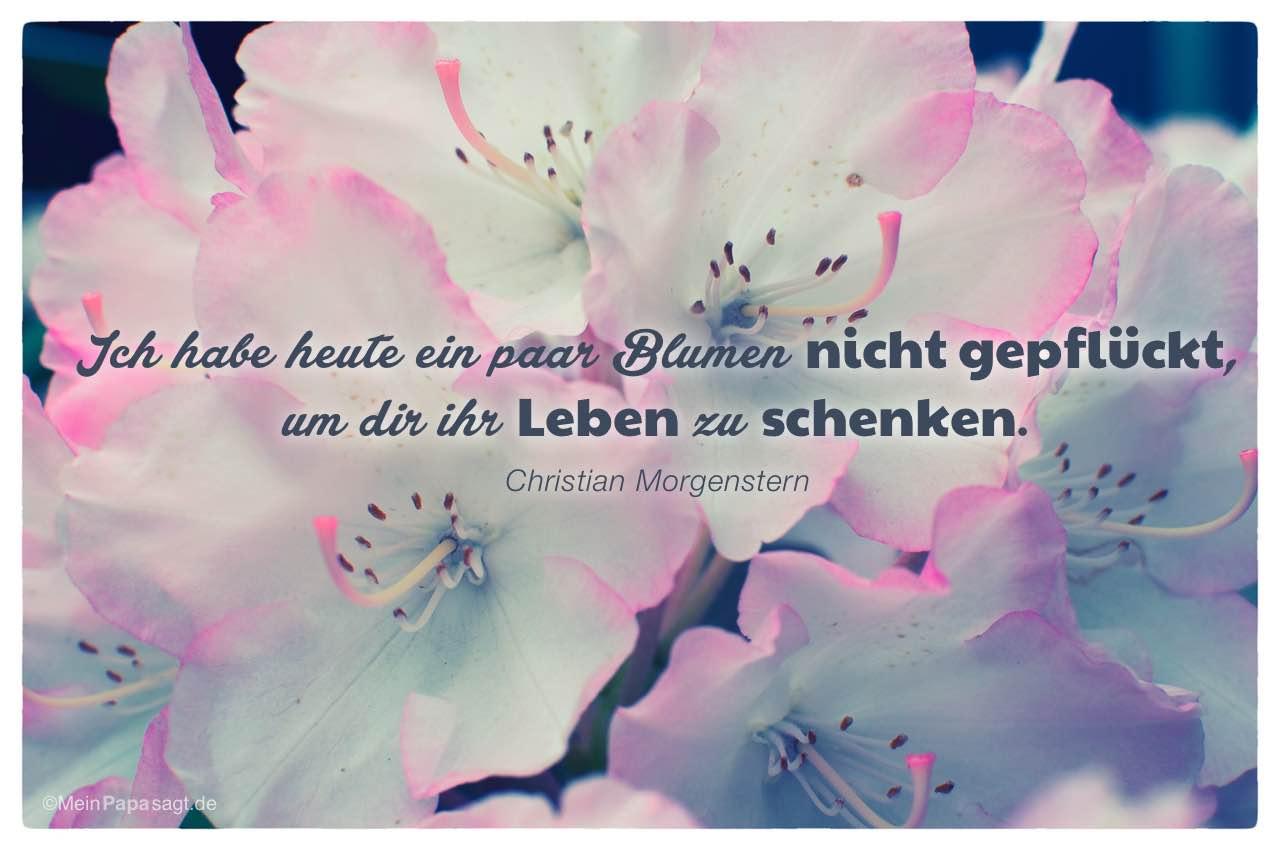 Blutenkelche Mit Dem Christian Morgenstern Zitat Ich Habe Heute Ein Paar Blumen Nicht Gepfluckt
