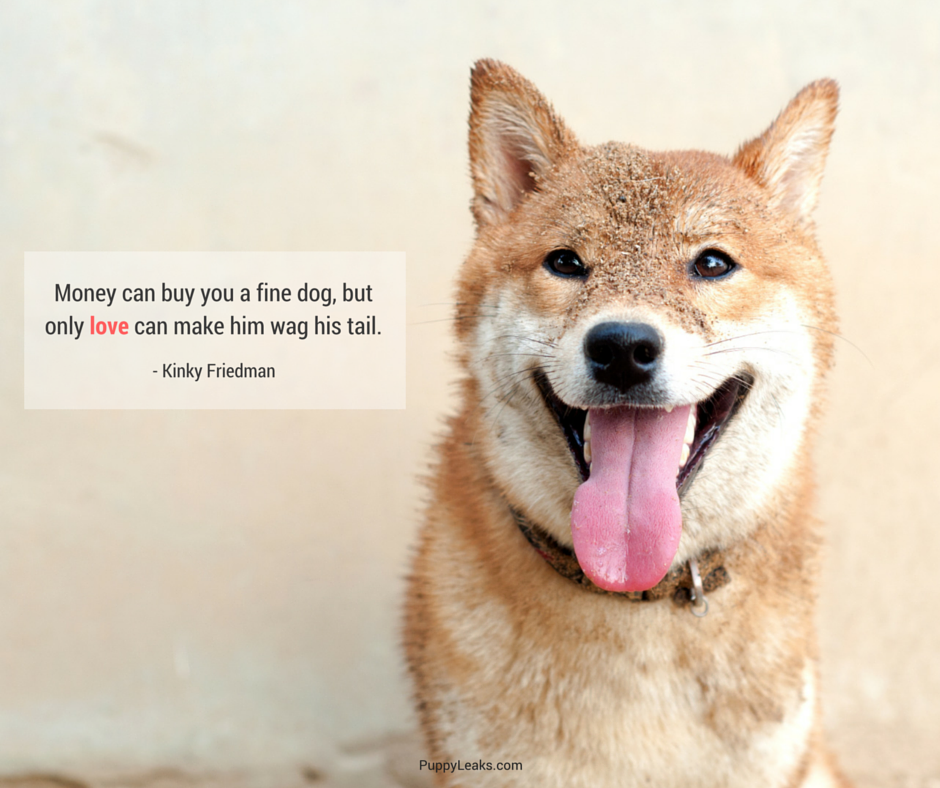 Favorite Dog Quotes