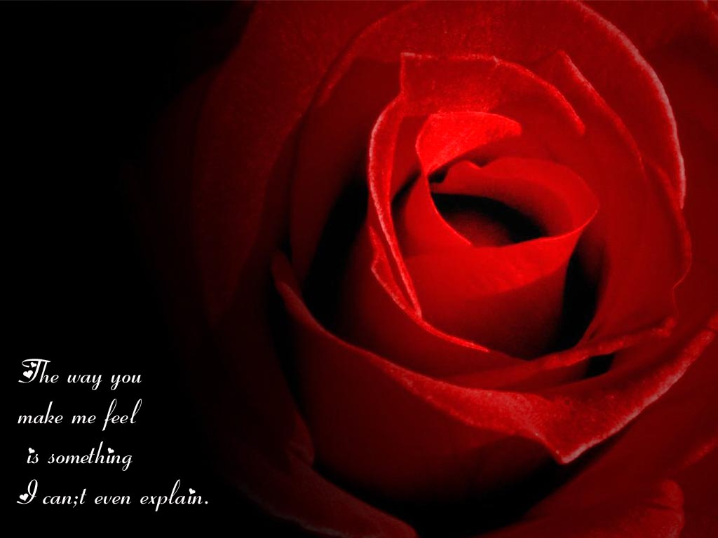 Love Rose Wallpaper With Quotes