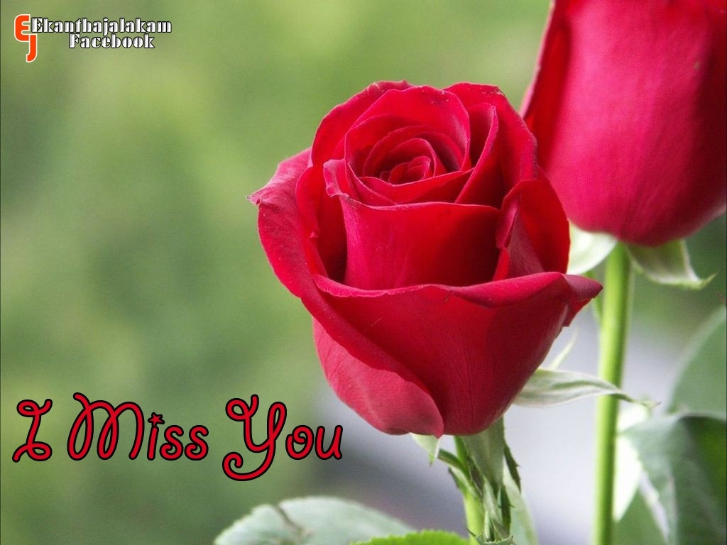 Red Rose Love Quotes Malayalam