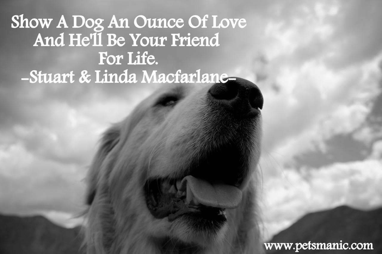 Show Your Dog A Love