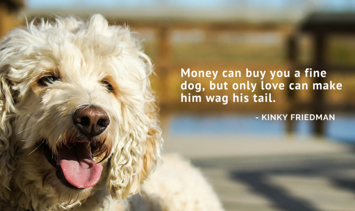 Of The Best Dog Inspired Quotes