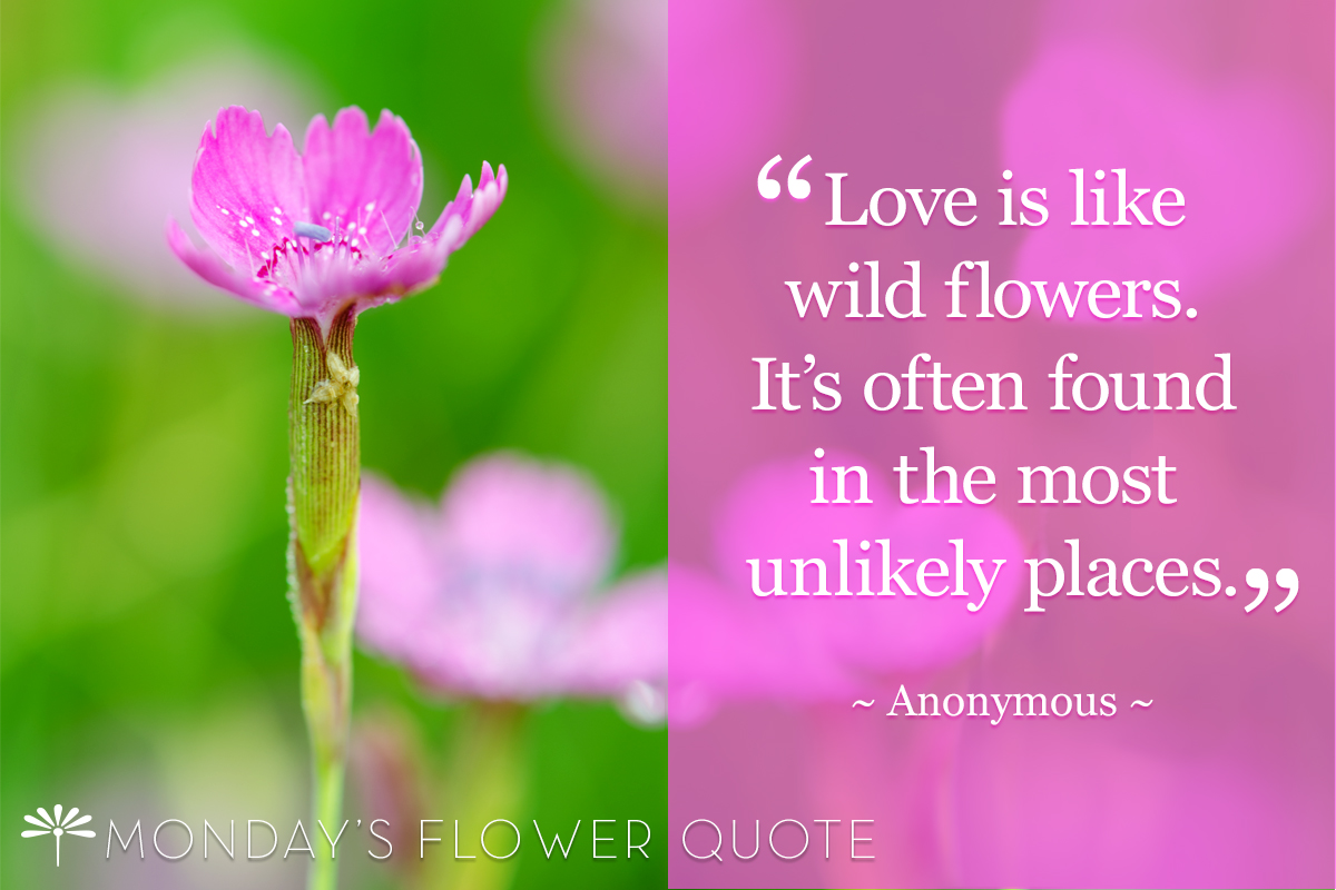 Love Is Like Wild Flowers Flower Quote