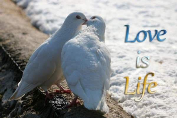 Image Result For True Love Images In Hindi