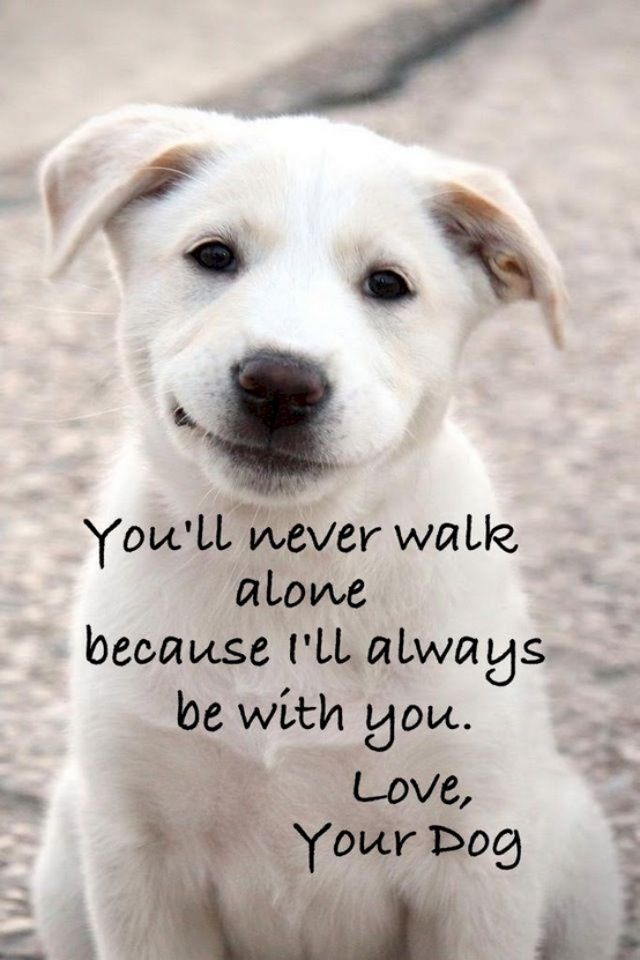 Dog Love Quotes Google Search