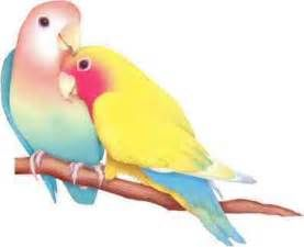 Love Birds Hearth Quotes Hurts Kiss Couples Bird Pictures Poems Cards