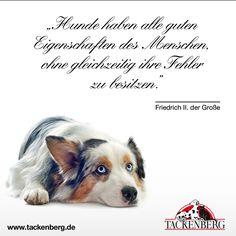 Hunde Haben Alle Guten Eigenschaften Des Menschen Ohne Gleichzeitig Ihre Fehler Zu Besitzen Friedrich