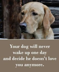 Dog Sayings Which Will Touch Your Heart