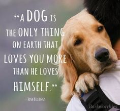 Quotes On Dogs That Died Google Search