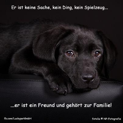 Luckypet Spruch Zitat Hund