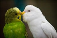 Love Birds Hearth Quotes Hurts Kiss Couples Bird Pictures Poems Cards I Love You