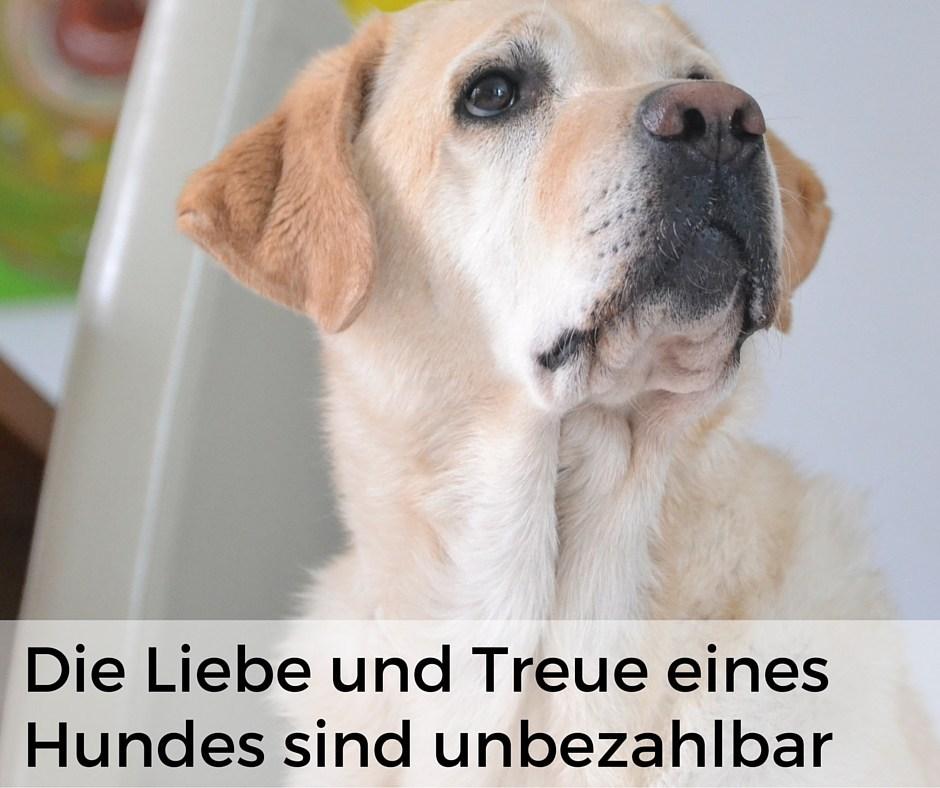 Alles Dog De