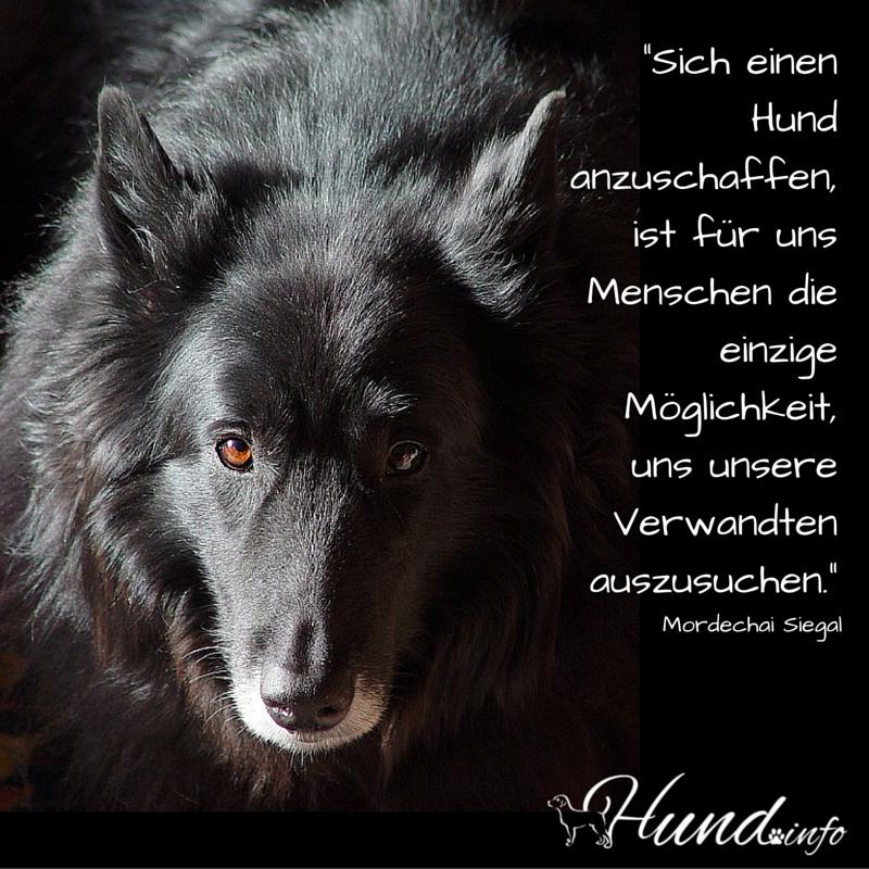 Sich Einen Hund Anzuschaffen Ist Fuer Uns Menschen